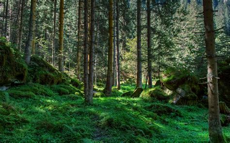 Mossy Forest Nature