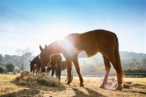 allergischer husten beim pferd expertentipp