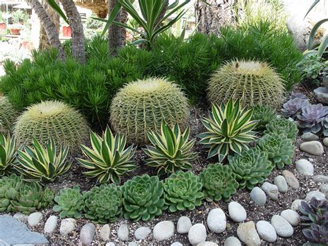landscaping with succulents ideas landscaping with succulents plant ideas bistrodre porch and landscape ideas