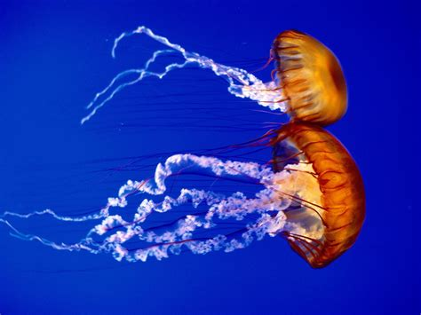 Sea Animal Wallpaper - sea creatures pictures wallpaper trend sea animals