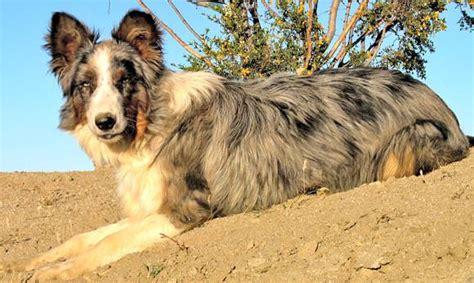 Augi - My Dog Breeders - Part 3