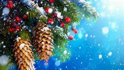 Christmas Winter Snow Berries Wallpapers Fir Background