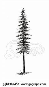 Pine Tree- tattoo idea. I like showing the roots | Tattoo ...