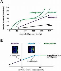 Cerebral Autoregulation And The Effects Of Acute Cerebral