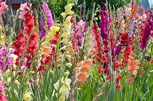 Bulbes D été : graines et bulbes fleurs lisch ~ Melissatoandfro.com Idées de Décoration