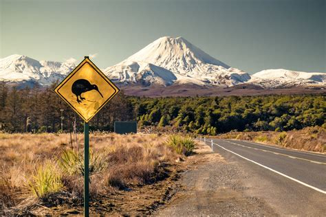kiwi zealand bird tongariro sign national road background northern mt wild circuit park island birds kiwis central north places mountain