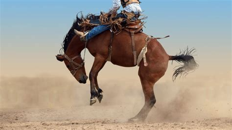 horse buck horses facts cool reason rodeo riding mean shutterstock grunge encouraging dumb tolerating mistakes risk doesn taking smart