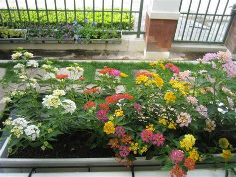 Bloggang.com : สุขา - ดอกไม้กระถางหน้าระเบียง