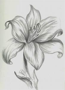 Best 25+ Pencil drawings ideas on Pinterest   Pencil ...