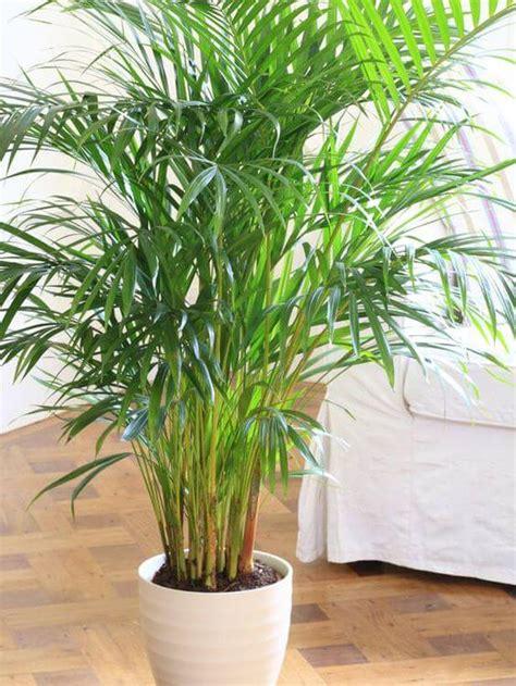Indoor Plants For Dark Corners