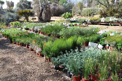 bushes for gardens ucr today botanic gardens plant sale