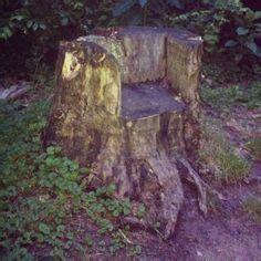 tree stump images tree