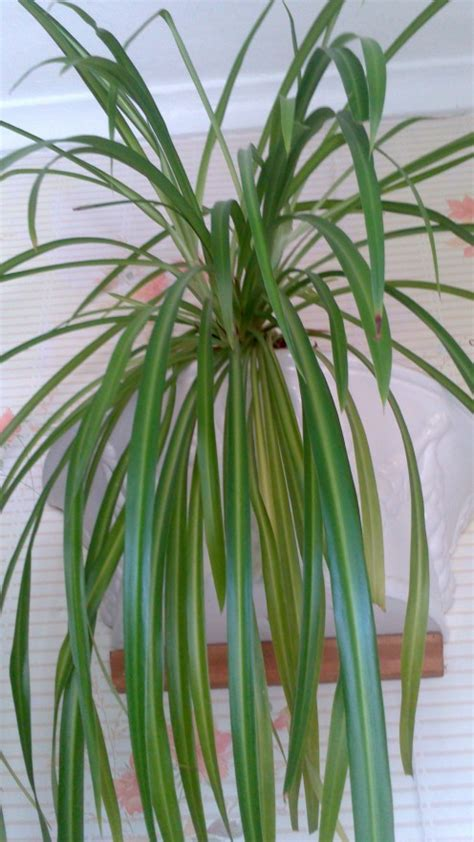 Zimmerpflanzen Bilder Und Namen by Indoor House Plants With Names And Pictures Hubpages