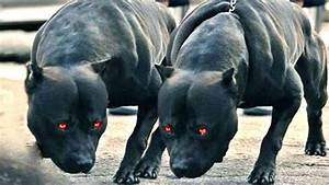 TOP 10 STRONGEST DOG BREEDS IN THE WORLD! ( 2017) - YouTube