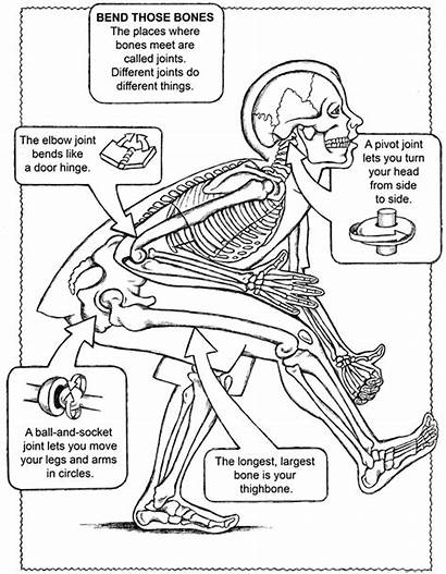 Coloring Human Pages Muscle Anatomy Printable Getcolorings