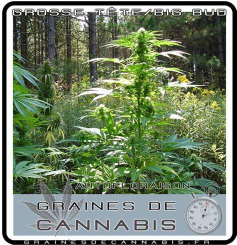 admin guide de cannabis