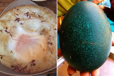 Fancy An Ostrich Egg With Your Fry Up? This Restaurant
