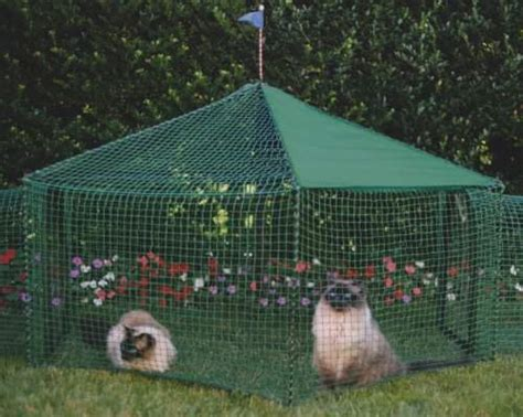 permanent tent outdoor cat enclosures outside protected play and rest