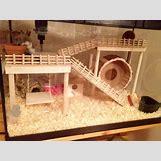 Robo Dwarf Hamster Cages | 960 x 720 jpeg 112kB