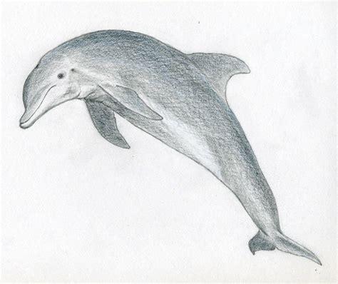 draw  dolphin