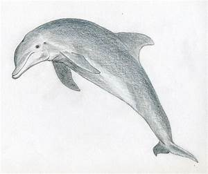 Draw a dolphin ~ Mulberry