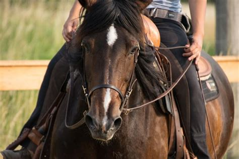 horse riding gear buyer tail head guide