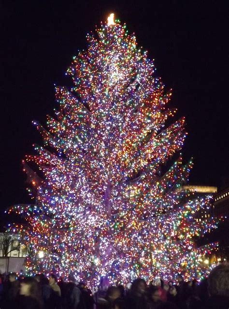 christmas lighting tree tree lights outside happy holidays