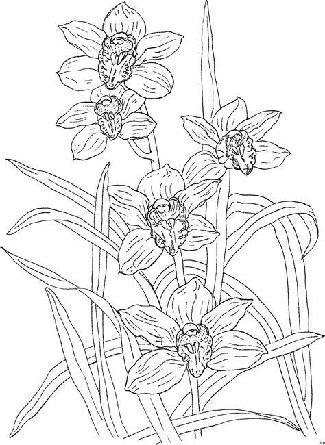 orchideengewaechs wenige ausmalbild malvorlage blumen
