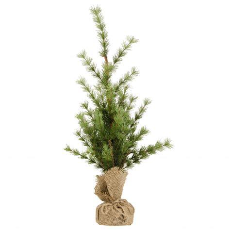 christmas tree saplings christmas decore