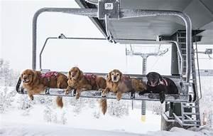 skiings unsung heroes ski patrol rescue dogs
