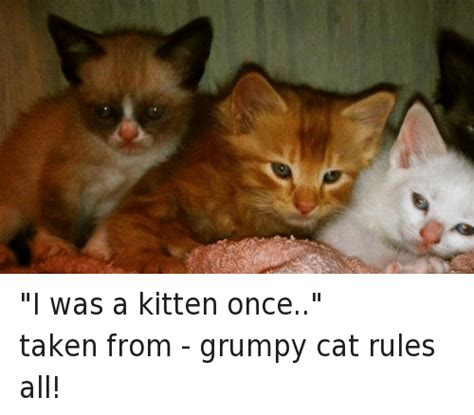 I Was A Kitten Once Taken From  Grumpy Cat Rules All