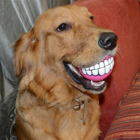 Teeth Ball Is A Very Funny Dog Toy Pics