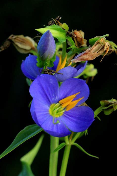 voting  september october flower   month flowers