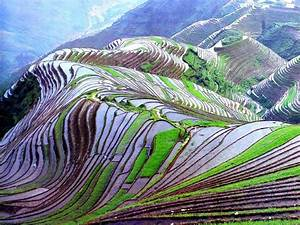 Rice fields. China | Feel The Planet