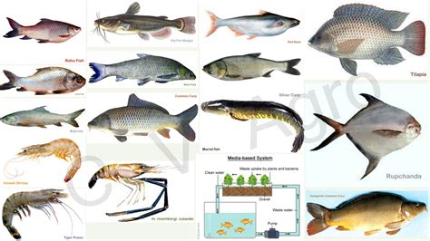 ultimate guide    start fish farming