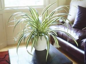 plantes et deco decoration par les plantes plantes d With quelles plantes pour jardin zen 3 comment decorer son interieur avec des plantes article