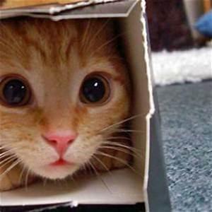 Katzenspielzeug Selber Machen Karton : katzenspielzeug kaufen oder selber basteln ~ Frokenaadalensverden.com Haus und Dekorationen