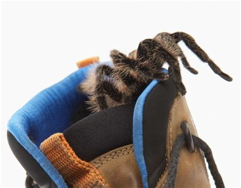 Keep Spiders Out Of Boat by Keep Spiders Out Of Your Shoes Thriftyfun