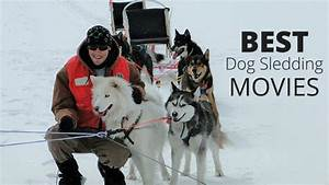 25 Best Dog Sledding Movies of All-Time - WESLEY BANKS