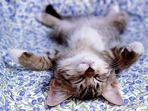 Knight Cat Picture: Cute Cat Sleep