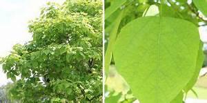Kugel Trompetenbaum Schneiden : garten ~ Lizthompson.info Haus und Dekorationen