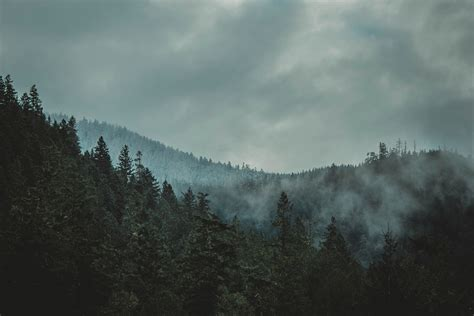 Free picture: fogg, hill, mist, snow, wood, landscape