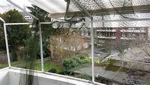 balkon mit markise katzensicher vernetzt katzennetze With markise balkon mit tapeten outlet nrw