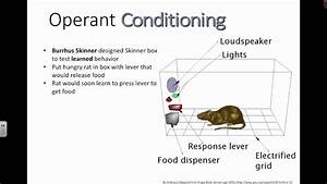 Operant Conditioning  Ib Biology