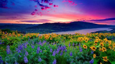 Star Wars Ships Wallpaper Nature Landscape Yellow Flowers And Blue Mountain Lake Hills Red Cloud Sunset Hd Desktop