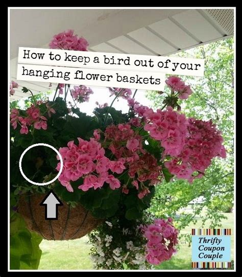 how to keep crows out of garden 7 best images about hanging gardens on