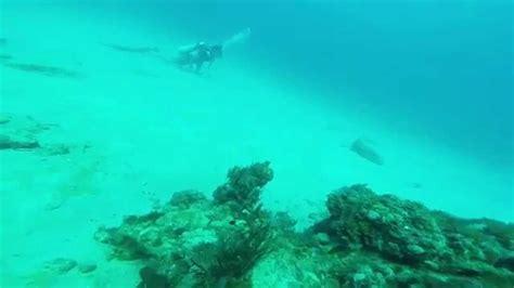 goliath grouper giant behavior