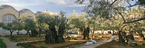 Der Garten Gethsemane by Land Der Bibel