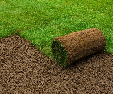 types of sod grass six types of grass for florida lawns