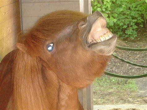 pferde staerken mit zirkuslektionen dressur  myhorse